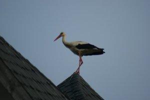 Stork3 th
